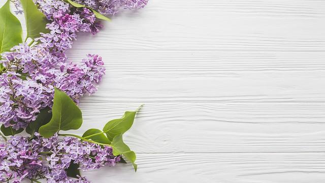 Обои цветы, ветки, весна, Сирень картинки на рабочий стол, раздел цветы - скачать