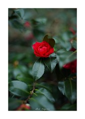 2019/2/8 - 6/9 photo by shin ikegami. - SONY ILCE‑7M2 / Lomography New Jupiter 3+ 1.5/50 L39/M (shin ikegami) Tags: sony ilce7m2 sonyilce7m2 a7ii 50mm lomography lomoartlens newjupiter3 tokyo sonycamera photo photographer 単焦点 iso800 ndfilter light shadow 自然 nature 玉ボケ bokeh depthoffield naturephotography art photography japan earth asia
