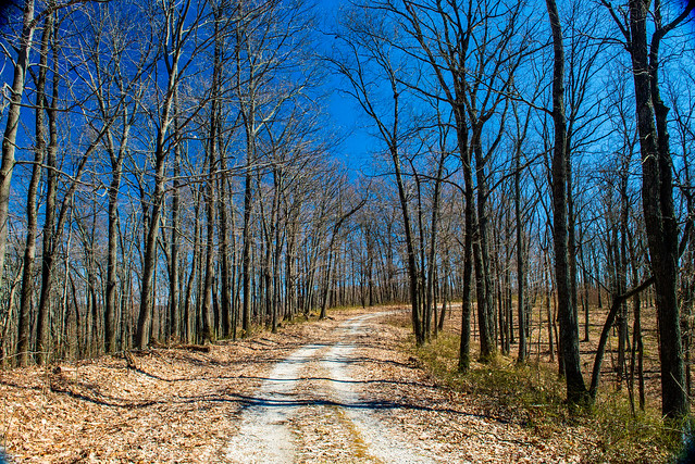 Hoosier National Forest - Fork Ridge Trail - March 16, 2019