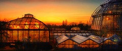 Sunset Botanical Garden, Berlin - amazing place! (Christian_from_Berlin) Tags: berlin sunset sunsetberlin botanicalgarden germany europe warm warmne warmness winter winterspaziergang wintertag steglitz dahlem gewächshaus hauptstadt licht abendstimmung sonnenuntergang sonne himmel sky