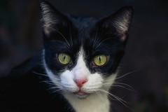Happy Caturday (AnyMotion) Tags: mira portrait porträt porträtaufnahmen pet cat cats katze katzen animals tiere garden garten 2018 anymotion blackandwhite schwarzweis blancoynegro félin chat gata 7d2 canoneos7dmarkii