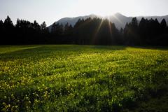 20190326a73_6432 (Gansan00) Tags: lce7m3 α7ⅲ sony zeiss japan 山口県 yamaguchi 日本 landscape snaps ブラリ旅 3月 錦町 菜の花