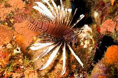 Reef Invader