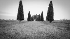 strada con cipressi ... (claudio erre) Tags: paesaggio alberi natura bianco e nero landscape black white noir et blanche italia italy nature
