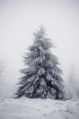 Taunusimpressionen (nordelch61) Tags: deutschland hessen heimat mittelgebirge feldberg oberursel winter schnee wald frost bäume blätter taunus