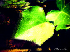Ivy (Stephenie DeKouadio) Tags: art artistic artwork abstract abstractart abstractflower abstractflowers abstractpainting macro macroabstract macropainting painting colorful darkandlight shadow shadows plant green