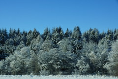 Snow Laden (steve_whitmarsh) Tags: aberdeenshire scotland scottishhighlands highlands winter snow trees forest road topic cairngorms