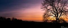 DSC_1048-Pano (alan.thecannon) Tags: tree unescolandscapesunset barren peaceful remote