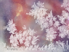 Morning Ice Walk (R_Ivanova) Tags: ice frozen frost abstract nature winter window cold colors color white pink sony rivanova риванова лед скреж зима замразен природа прозорец цветно макро macro абстрактно арт fav20