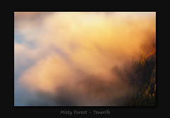 Misty Forest (MC--80) Tags: misty forest tenerife