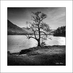 Ullswater Tree - 2019-02-22nd (colin.mair) Tags: filter nd10 frame border ullswater tree long exposure england uk water hills bw black white monochrome square