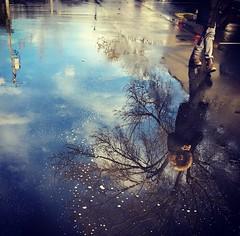 March, Still Raining (Dan Brekke) Tags: berkeley westberkeley fourthstreet alamedacounty sanfranciscobayarea northerncalifornia california instagram reflection