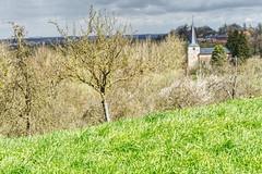 Preparing for Spring (enneafive) Tags: spring grass kuttekoven wilderness tree sky clouds church fujifilm xt2 affinityphoto nature bucolic village belgium limburg borgloon green