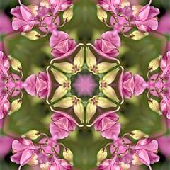 Kaleido Abstract 1907 (Lostash) Tags: art abstract edited nature patterns symmetry kaleidoscopes