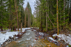 Downstream (kijimages) Tags: longexposure mountrainier snow streams washingtonstate creeks landscape mountains water