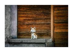 noch ein Türchen - dann komm' ICH ... (WolfiWolf-presents-WolfiWolf) Tags: wolfiwolf wolfi wolf wolfismus werwolfi weristderschönste eneamaemü enea augen alone tür advent weihnachten christmas window jazzinbaggies jazz joy majestic blue butlers blueeyes butler butleruniversum conductor composition chef dirigent dirigat farky fresko glück himmel ich meinemajestät kleinewolfis lupus multiversen marieschen multiverses music naturwunder öhrchen portrait quantensuppe quantensymphonie quantenuniversum rot stüben schön schweinebauch tanz universum vollmond waiting xmas lyric zeitzeuge wood street nosferatu