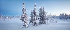 Winter  tundra panorama (czdistagon.com) Tags: winter snow landscape frozen fir beautiful frost new year dawn white season forest hoarfrost sun cold nature outdoor hoar spruce wood background snowy snowfall holiday vacation hill wonderland travel ice cloud panorama scene cover nobody panoramic view powder shadow scenic trip weather silence natural breathtaking tourism russia