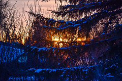 2019 first sunrise (darletts56) Tags: sky cloud clouds peach orange gold golden tree trees branch branches snow sun sunrise 2019 first truck garage village morning cold winter light bright bush bushes caragana evergreen green silhouette