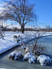 pretty snow (ekelly80) Tags: dc washingtondc january2019 winter snurlough snow snowstorm shutdown trumpshutdown snowday snowywalk white snowy nationalmall constitutiongardens pond frozen snowcovered ice