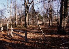 Happy Fence Friday... (angelakanner) Tags: sonynex6 elizabethmortonbirdsanctuary fencefriday fence trees winter nature processed wood