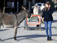 Wild burro encounter (thomasgorman1) Tags: burro town street streetphotos streetshot woman travel tourism fujifilm candid donkey animal outdoors az arizona tourist sign wild wildlife