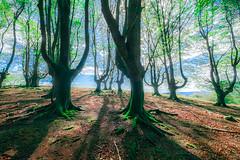 UBIDEA mendia  - copia (juan luis olaeta) Tags: paisajes landscape forest bosque basoa contraluz fujifilm