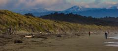 Beach Walkies (Steve Taylor (Photography)) Tags: walkies dog brown blue green sand newzealand nz southisland canterbury christchurch beach dunes seaside southernalps mountain fir trees grass autumn cloud bottlelakeforest