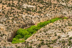 Desert Green (Ralph Earlandson) Tags: coloradoplateau uthighway12 tree desert cottonwood utah droh dailyrayofhope2019