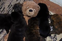 Photo (Adventures With Teddy) Tags: teddy adventures with photographers tumblr original puppies bear travel snuggle cuddle international blog bug cute jealous