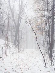 les premières neiges / first snow (cébé céline) Tags: sentier montagne brume neige arbres feuilles hiver saison blanc forêt mountain forest white season winter leaves trees snow path fog mist montréal