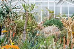 Botanischer Garten (Muenocchio) Tags: botanischergarten munich münchen