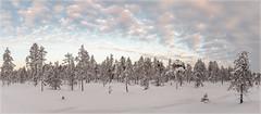 Ylläs-Finnland_92525P (uwe_cani) Tags: panasonic g9 finnland finland skandinavien scandinavia lappland lapland ylläs winter schnee snow natur nature outdoor landschaft landscape wolken clouds bäume trees himmel sky