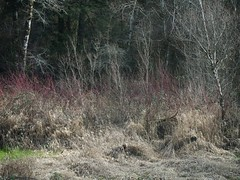 (photo ephemera) Tags: photoephemera p2181448 brownsmead dike lane