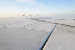 Winter (JaapWoets) Tags: hoogtefoto landschap luchtfoto mavic2pro sneeuw winter twisk ganzen molens boerderij