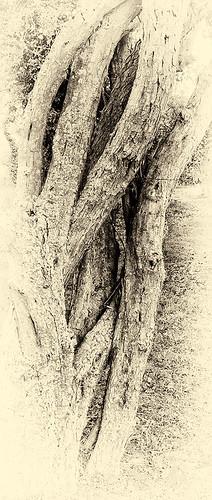 {Tangle Wood}FCC108