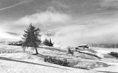 South Tyrol (verawald) Tags: winter tyrol tirol süd south mountain berg schnee snow snowing hütte hut wood house woodhouse