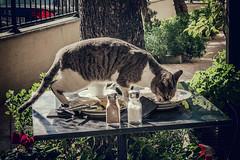 Everyone loves Maybe (Melissa Maples) Tags: istanbul turkey türkiye asia 土耳其 apple iphone iphonex cameraphone winter kalamış café restaurant maybe meal food table funny animal kitty cat
