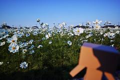 DP0Q2936 (noryouforme) Tags: sigma dp0quattro foveon quattro sanko nakatsu oita japan danbo danboard yotubato figure