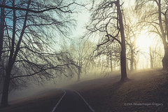 guiding lines (Dyrk.Wyst) Tags: germany park parkway wuppertal atmosphere backlight baretrees beechtrees calm fog foliage forest forestfloor landscape light monochrome mood morning nature silhouettes sunrise trees