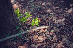KRIS8097 (Chris.Heart) Tags: erdő buda budapest túra természet forest nature hiking