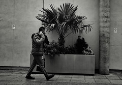 The Planter (Bury Gardener) Tags: burystedmunds bw blackandwhite britain monochrome mono england eastanglia uk people peoplewatching folks nikond7200 nikon suffolk streetphotography street streetcandids snaps strangers candid candids arc thearc