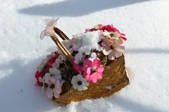 С первым днем весны! (Angelok-Happy) Tags: весна 1марта корзинкацветов снег природаspring march1 snow nature flowerbasket