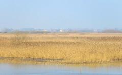 IMG_0017x (gzammarchi) Tags: italia paesaggio natura ravenna mandriole valledellacanna lago canneto casa