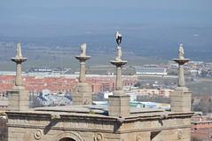 CÁCERES (EXTREMADURA/ESPAÑA/SPAIN) (DAGM4) Tags: cáceres extremadura provinciadecáceres españa europa europe espagne espanha espagna espanya espana espainia spain spanien birds naturaleza nature 2019
