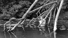 Marzka (piotr_szymanek) Tags: marzka woman milf outdoor swaderki lake water nude naked flashing blackandwhite face eyesoncamera tree portrait reflection 1k 20f 5k 10k 20k