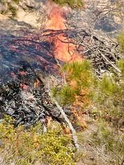 Buschfeuer auf Fraser Island (Sanseira) Tags: australien australia queensland fraser island 2001 buschfeuer bushfire