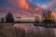 The red sky above the river (jan.vd.wolf) Tags: sunset zonsondergang sky red river rivier tree boom bomen water sun