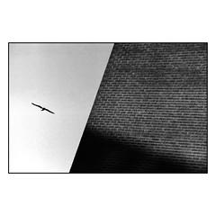 Den första, en enda (MilosHortagaard) Tags: bird sky geometry malmö sweden olympusom1 soligor70210 kentmere400