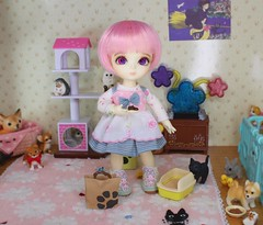 The Fallen Star Finds Hope #6 (Arthoniel) Tags: feign reign shire pets animals cat dog liccachan latidoll suji ns normalskin basic faceup haru tan owl ooak roombox gakman creations artdoll dollhouse collection tiny miniature rement bid balljointeddoll latiyellow house figure vet