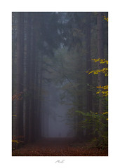 Out of the Deep Forest (Max Angelsburger) Tags: ghost shadow autumn mist fog mood moody silhouette encounter person outofthefog brown green golden leaves herbst farben colors braun orange schwarzwald blackforest country badenwürttemberg 2018 pznews fiftyshadesofnaturestunningshotsigersmoodadventurethatislifenaturebrilliancekeepitwildnaturesultansmastershotsourplanetdailystayandwander